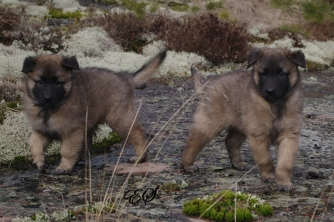 Aston (left) & Aiden (right) 08.04.2018